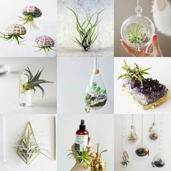 idées déco avec des plantes Tillandsia