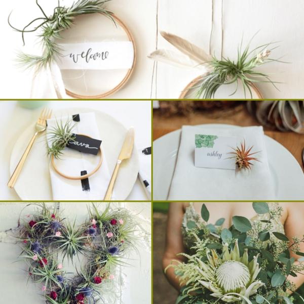 idées déco mariage plantes Tillandsia