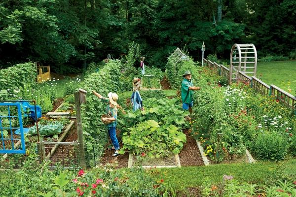 jardin potager bien parcellé