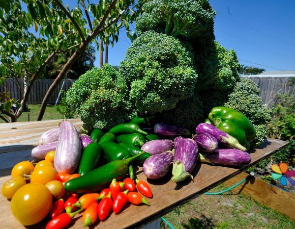 jardin potager bonne récolte