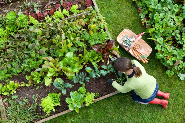 jardin potager un mélange vert