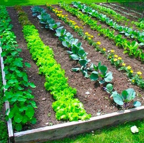 jardin potager une masse verte