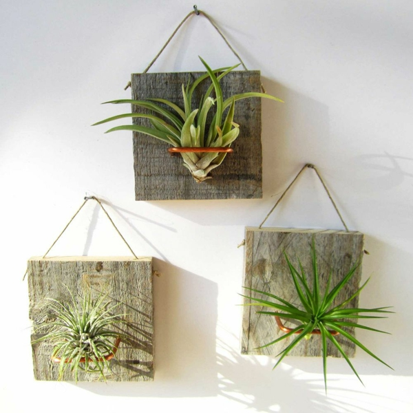 jardinières suspendues plantes Tillandsia déco mur