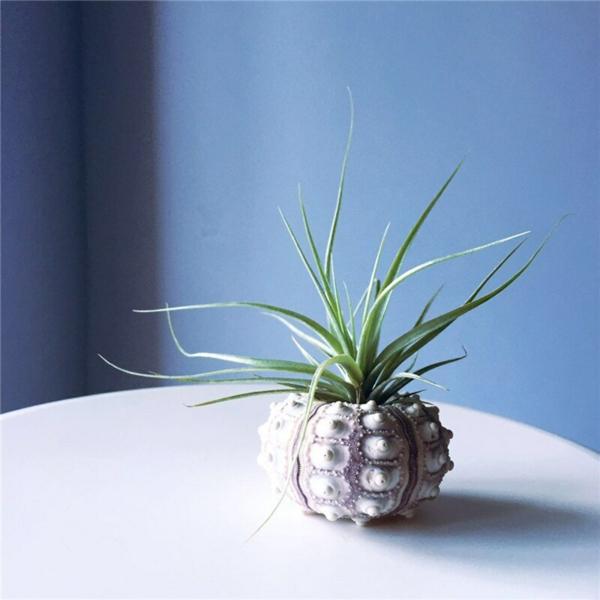 oursin transformé en vase de plantes
