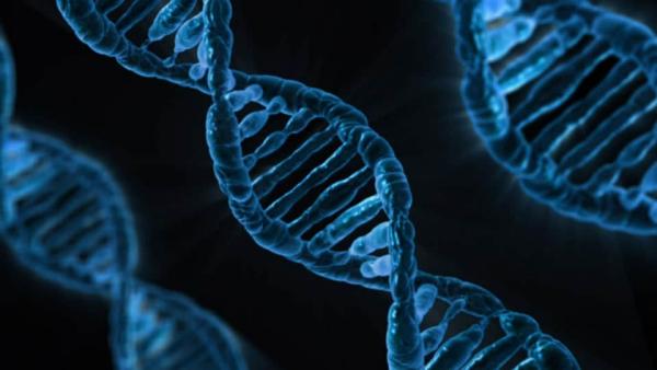 risque de cancer mutation des gènes