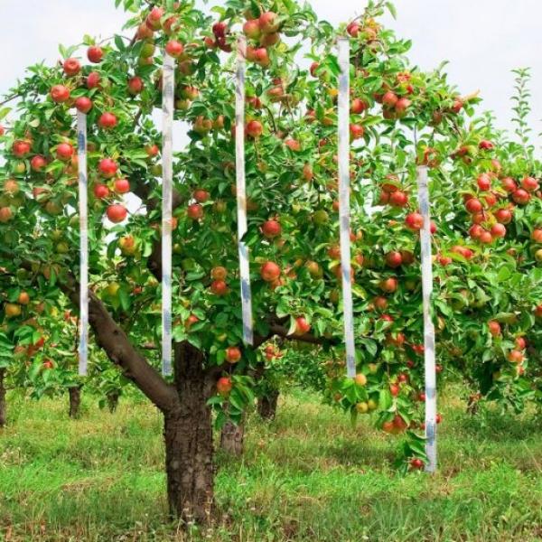 comment chasser les merles du jardin belle récolte de pommes
