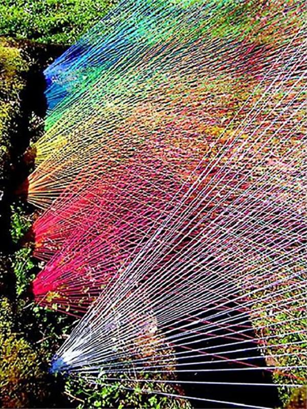 comment chasser les merles du jardin fils multicolores