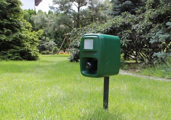 comment chasser les merles du jardin outil électronique