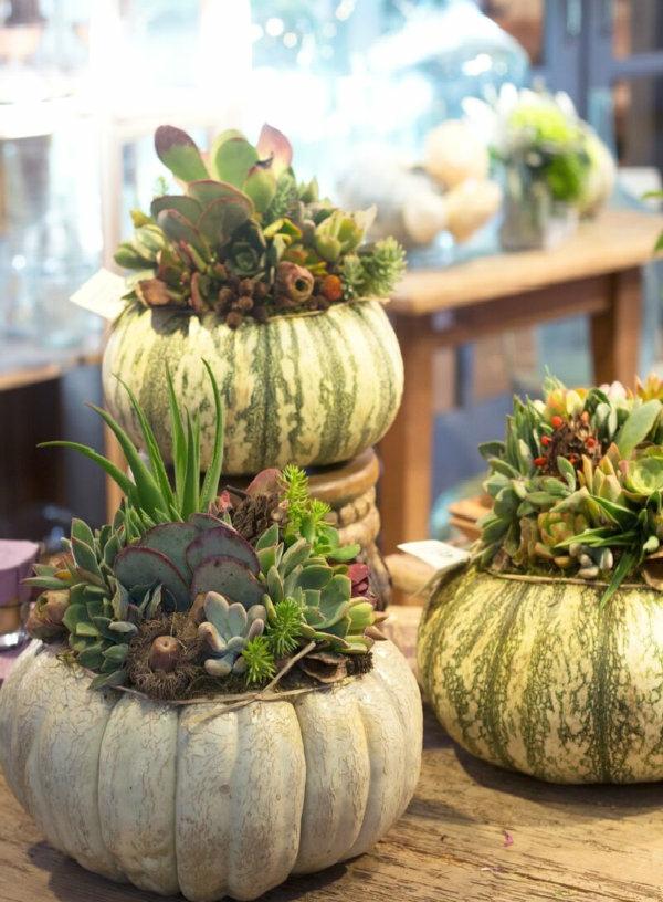 décoration florale automnale citrouilles plantes succulentes