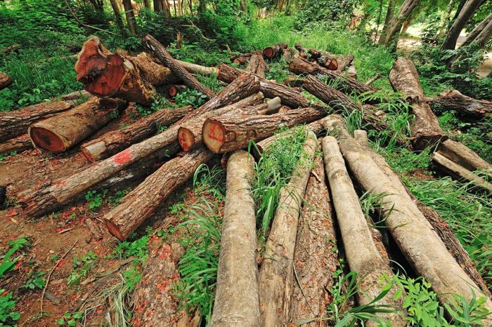 déforestation amazonie leonardo dicaprio
