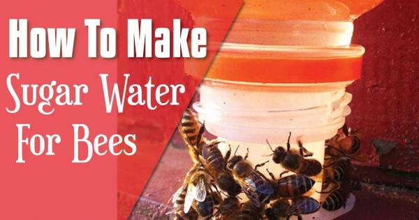 les abeilles du sirop pour les abeilles