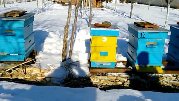 les abeilles nourrir les abeilles