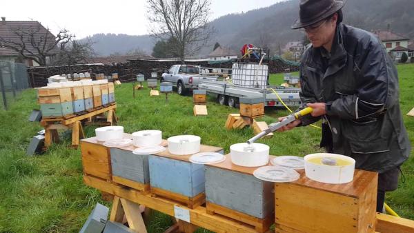 les abeilles préparer le sirop