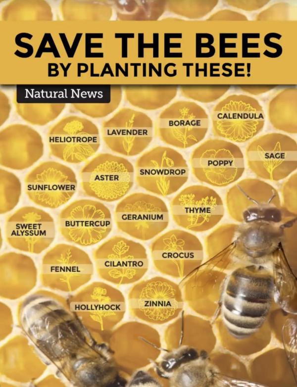 les abeilles sauver les avettes