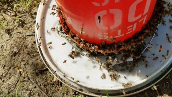 les abeilles se ruer vers la nourriture
