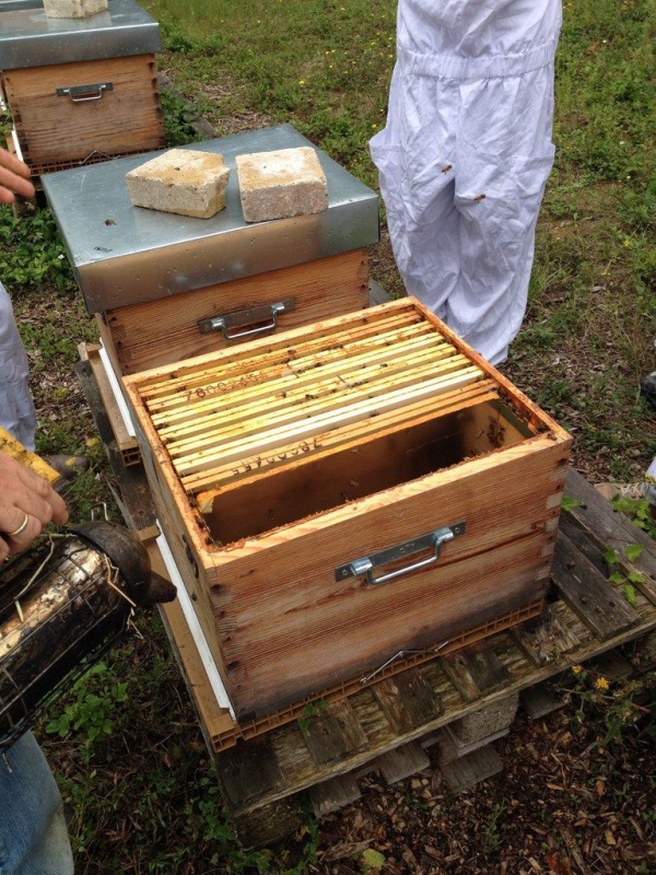 les abeilles travail dur