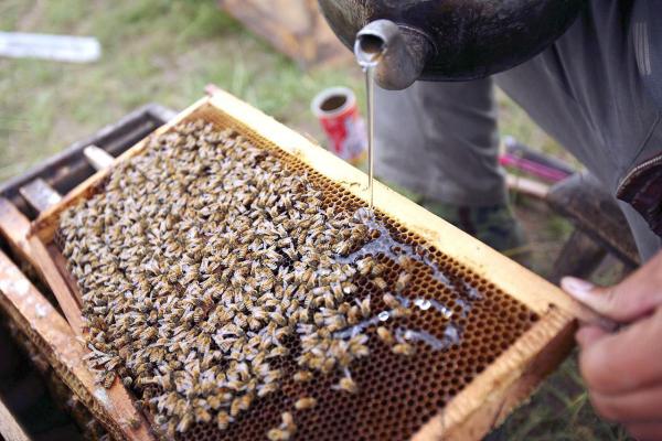 les abeilles verser le sirop