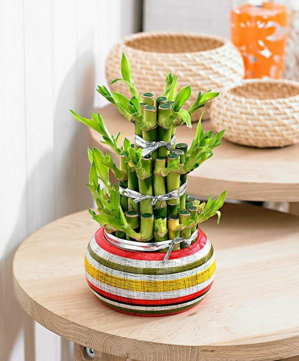 plante feng shui porteuse d'énergie positive bambou de la chance