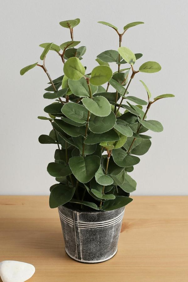 plante feng shui porteuse d'énergie positive eucalyptus