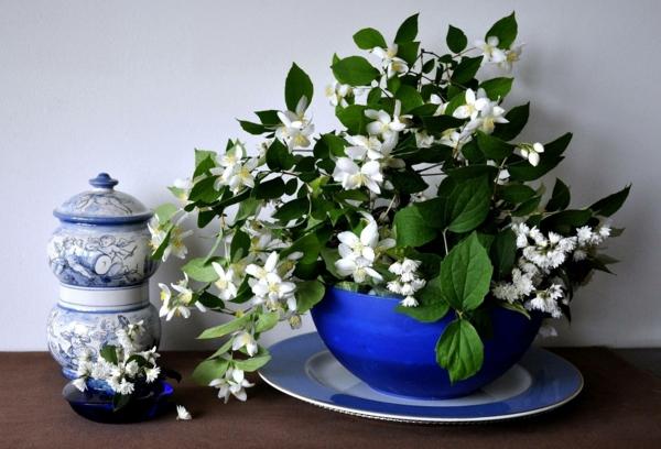 plante feng shui porteuse d'énergie positive jasmin