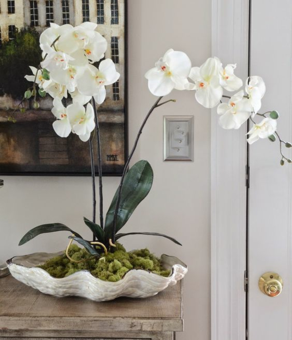 plante feng shui porteuse d'énergie positive orchidée