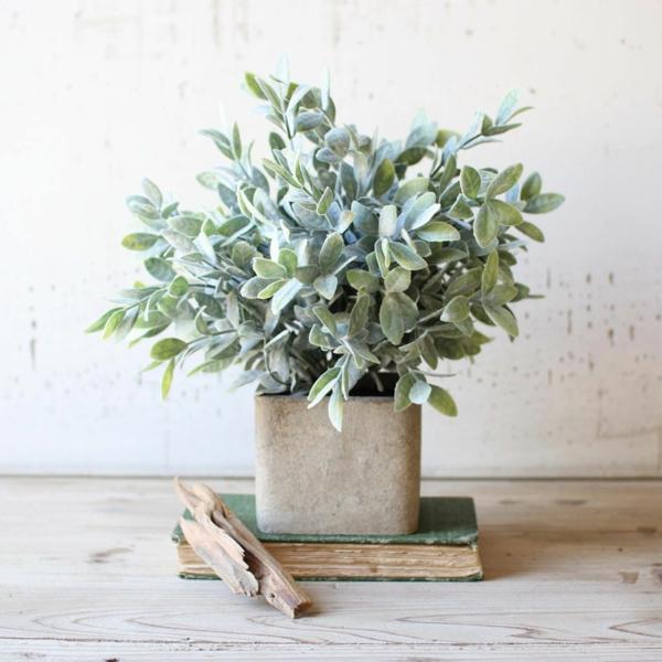 plante feng shui porteuse d'énergie positive sauge officinale