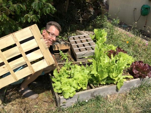 planter les salades couvrir de caisses
