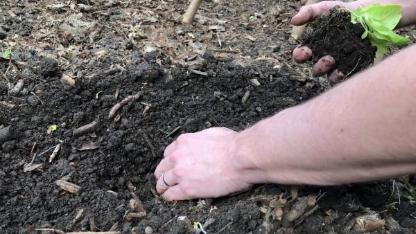 planter les salades préparer un trou