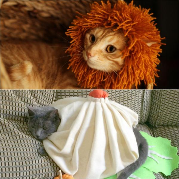 bricolage halloween déguisement pour chat
