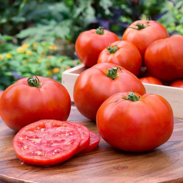 chakchouka plat à base de tomates