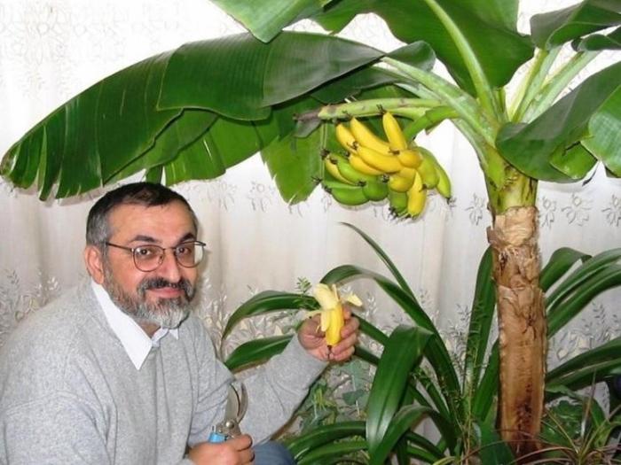planter banane fruits en pot