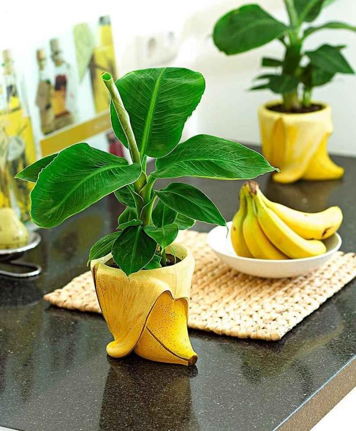 planter banane jolis pots