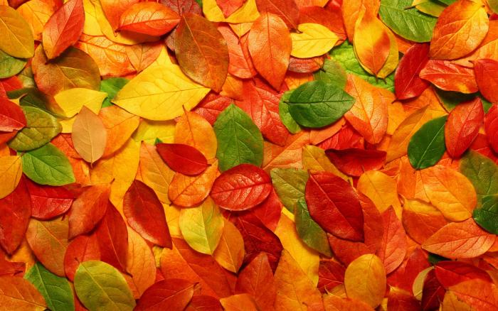 que faire quand on est dépriméles teintes de l'automne