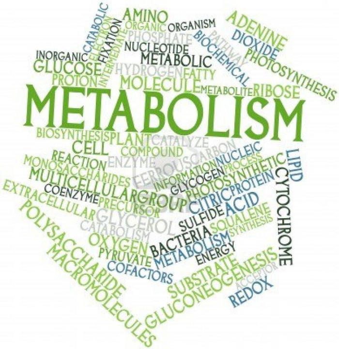 que faire quand on est dépriméquel métabolisme
