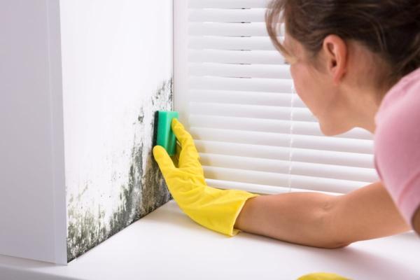 humidité condensation moisissure nettoyer les murs