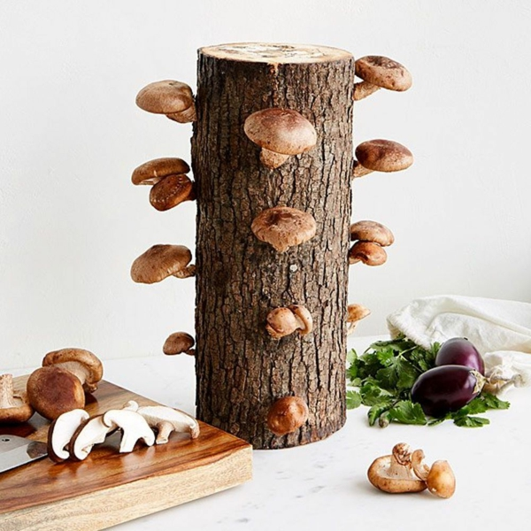 idée cadeau noël papa kit culture de champignons