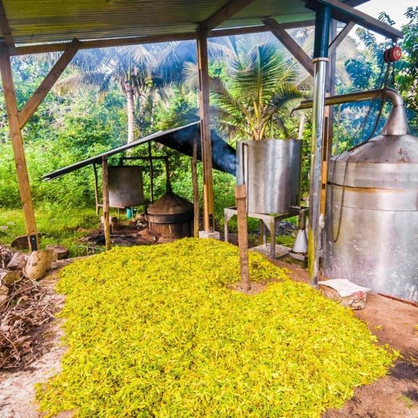 distillation huile essentielle ylang ylang île de mayotte