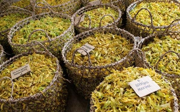 huille essentille ylang ylang récolte île de madagascar