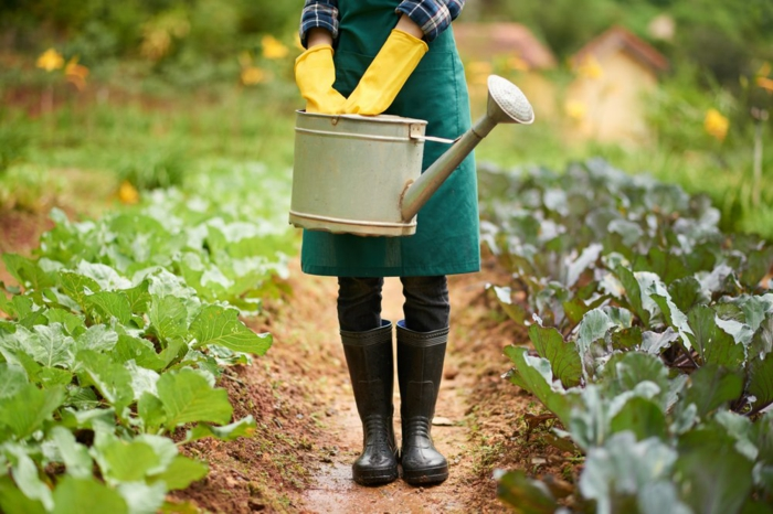 jardiner avec la lune conseils 2020