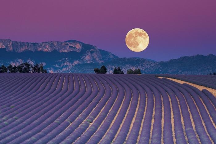 jardiner avec la lune conseils pour réussir