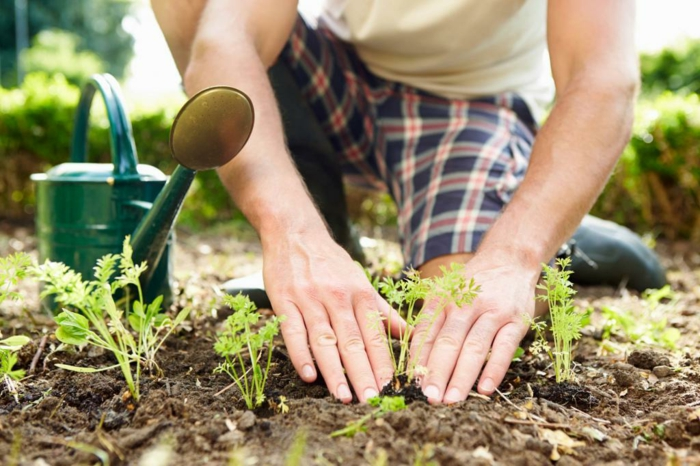 jardiner avec la lune pour réussir