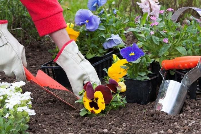 planter les fleurs jardiner avec la lune conseils