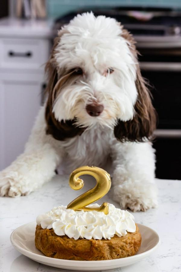 recette gâteau d'anniversaire pour chien à la crème fouettée
