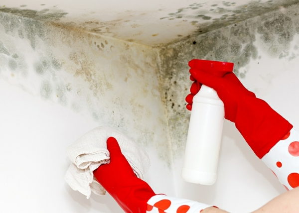 supprimer la moisissure avec percarbonate de soude