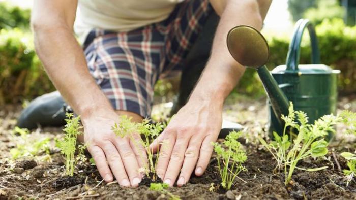 associer les plantes jardiner au naturel