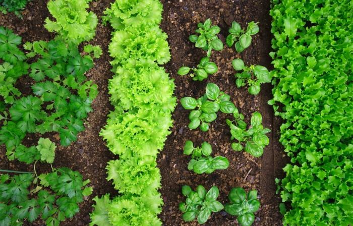 conseils jardiner au naturel associer les plantes
