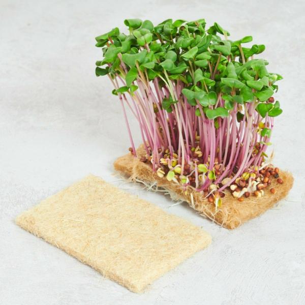 cultiver des micro-pousses soi-même