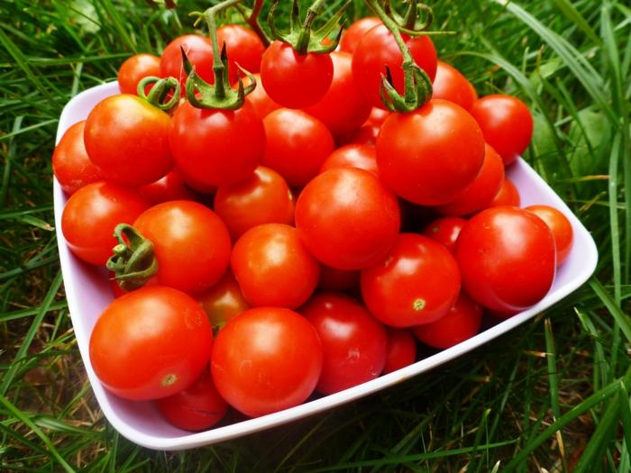 cultiver les tomates jardiner au naturel voisinage