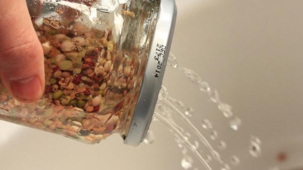 faire tremper des graines pour cultiver des micro-pousses