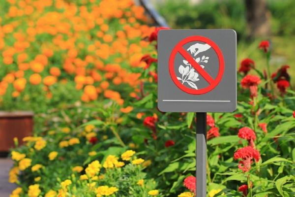 fleurs à ne pas manger